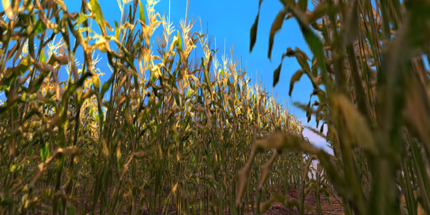 The Cornfield--the infamous Linden time-out area for many years